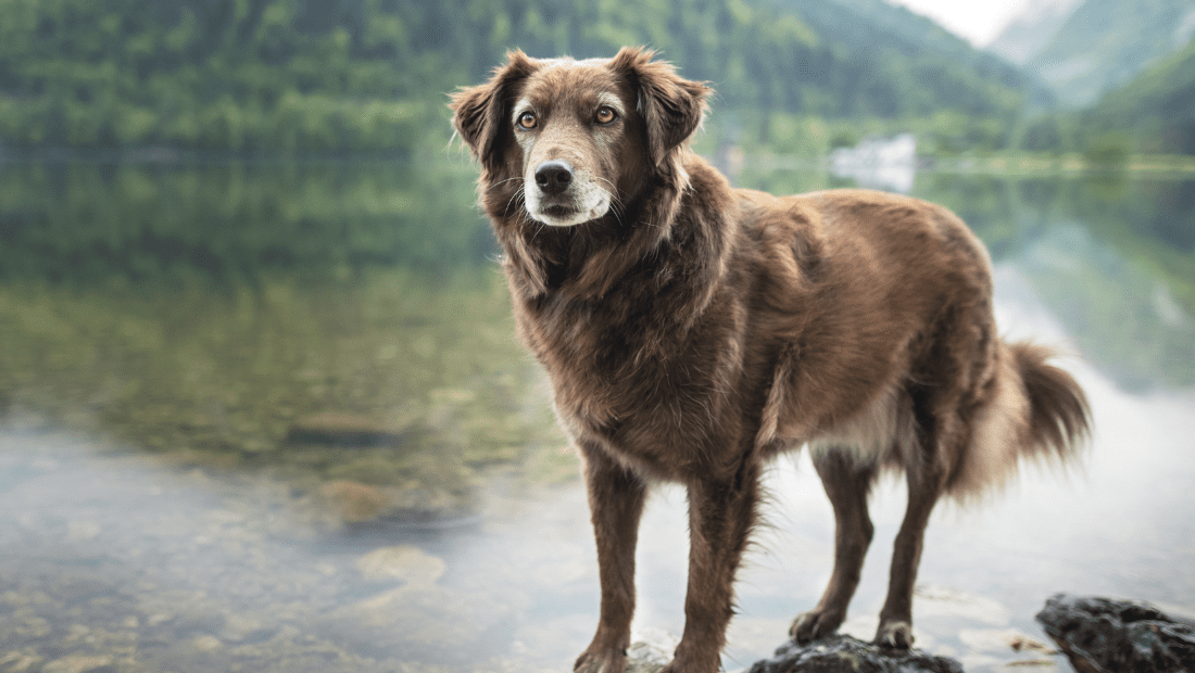 A dog sat by a lake