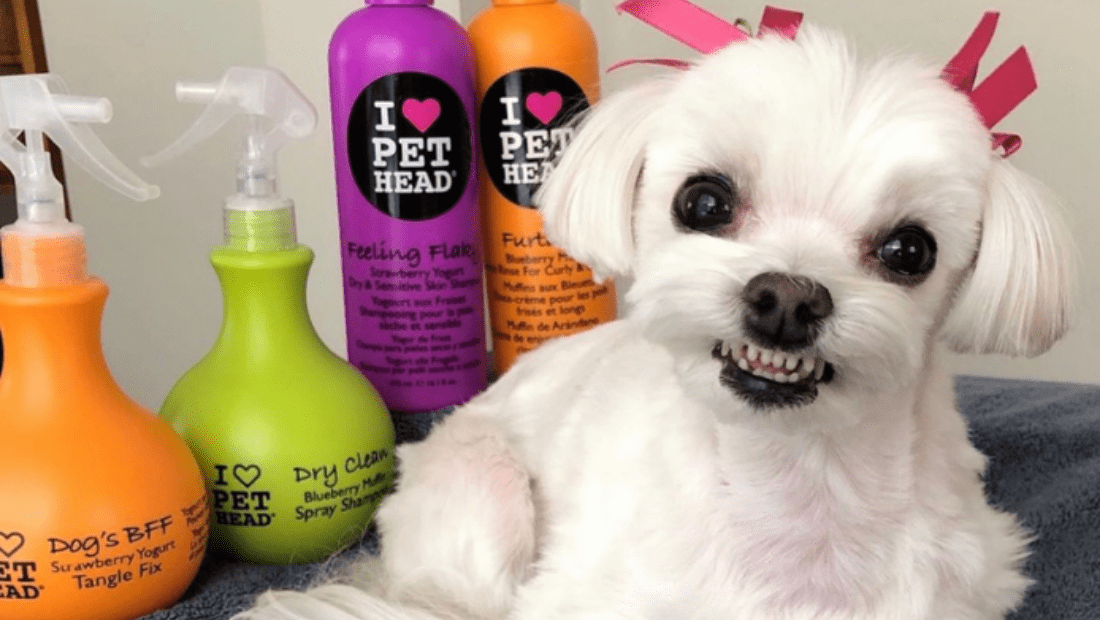 A very well pampered dog looking delighted next to Pet Head products
