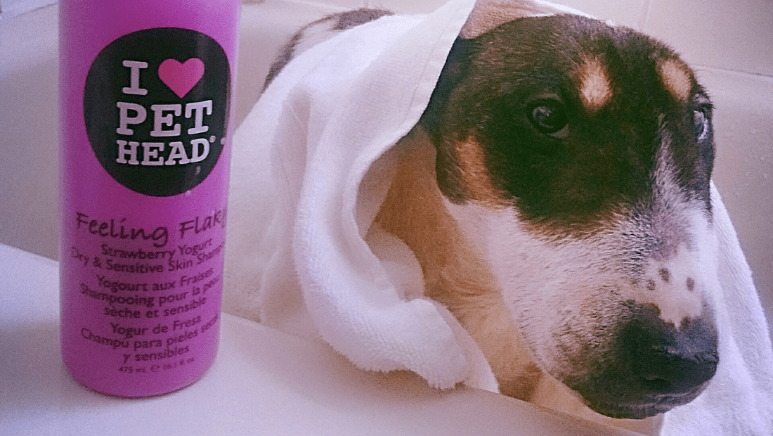 A dog in the bath next to a bottle of Pet Head Feeling Flaky